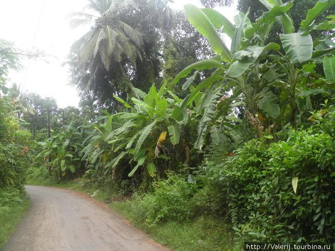 А бананы на окраине