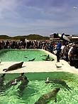 Кормление морских котиков
