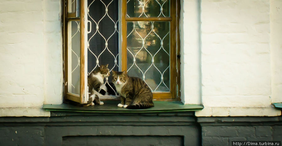 Две кошки подслушивали что-то у окна. А потом заметили нас и смутились.