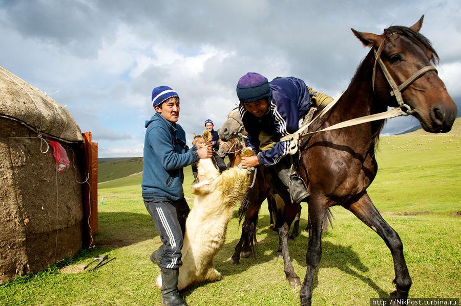 Одной из самых популярных является конно-спортивная борьба кокпар (в переводе означает «серый волк»), в которой среди всадников идет борьба за овладение тушей козла. Казахстан