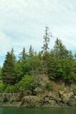 На некоторых деревьях попадались гнёзда белоголовых орлов — символов Америки, но снять их было трудно — они всё время улетали на охоту.
