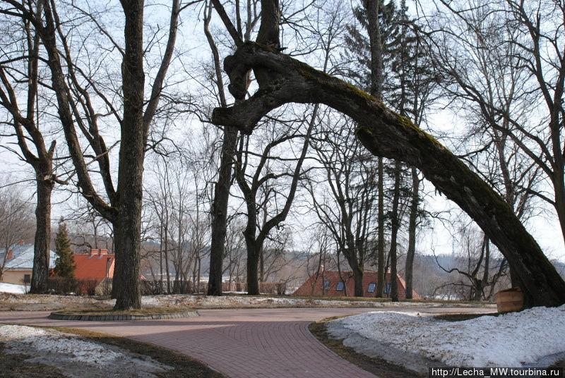 Деревья в парке в Валмиера