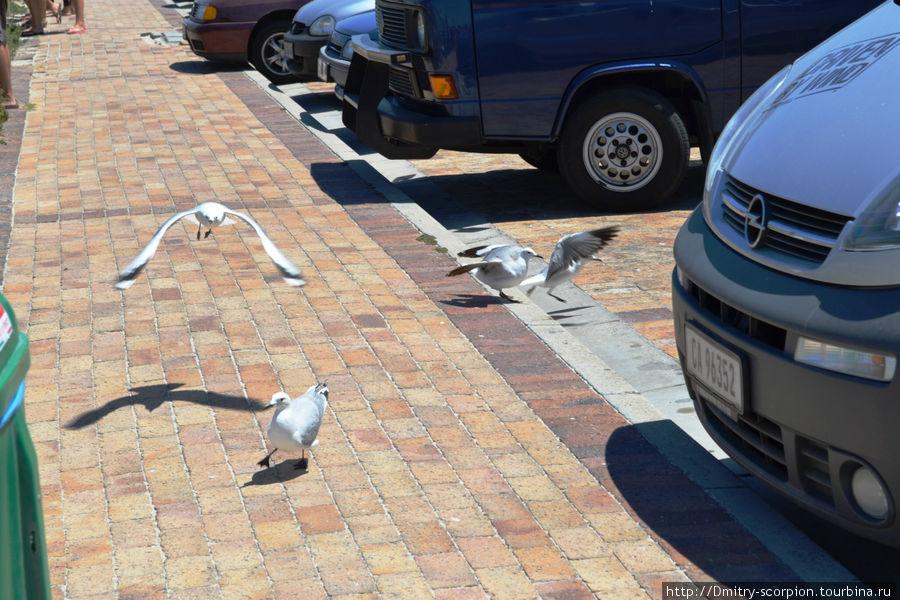 Кейптаун... И пусть весь мир подождет Кейптаун, ЮАР