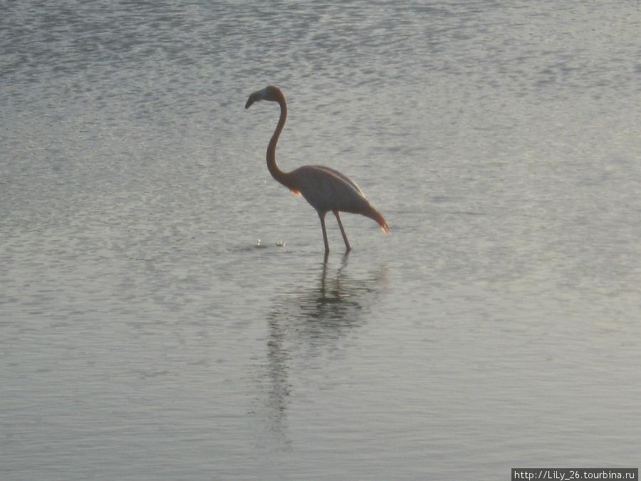 Фламинго!