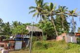 Пальмы в Керале очень высокие