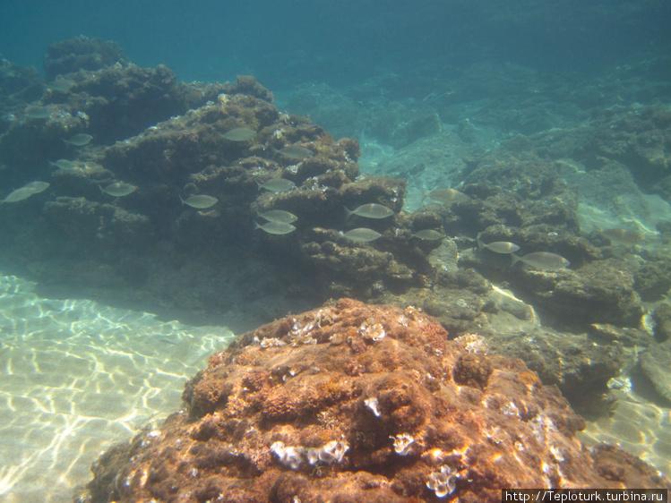 Подводный пейзаж с рыбкам