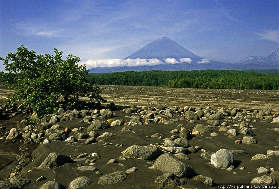 В сухом русле реки Камчатки. Вид на вулкан.