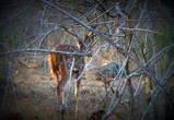 Фотоохота за оленем