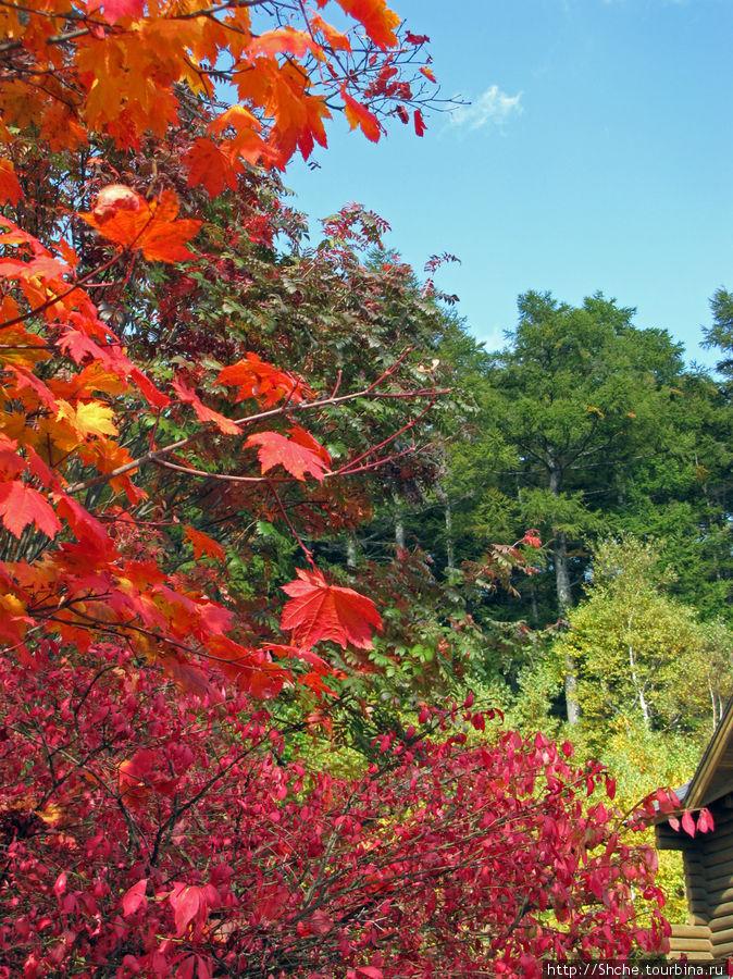 Красно-зеленое начало осени