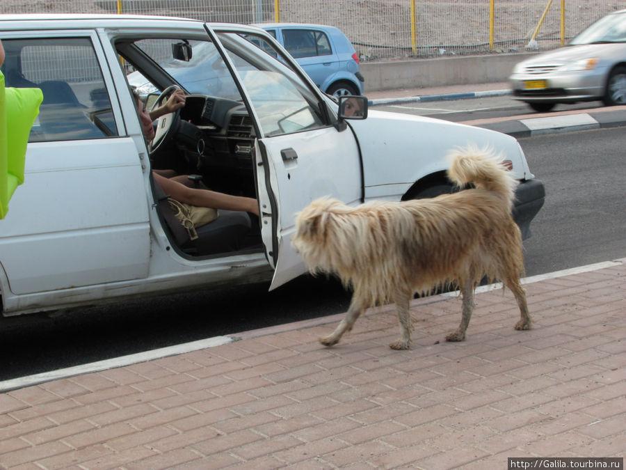 Машина подана большому директору.