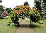 По периметру цветочного сада тянется пергола и арки с цветущими лианами.