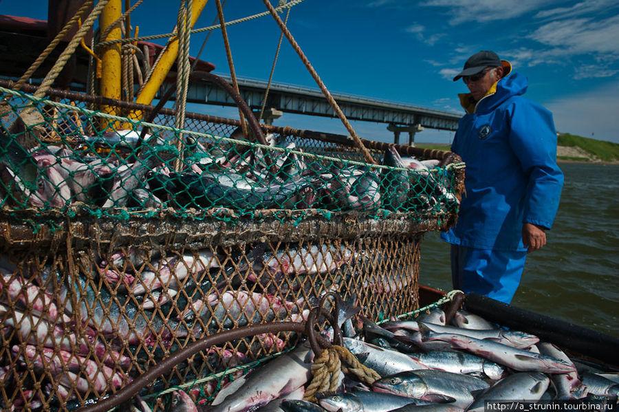 ведущие рыболовные компании