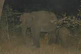 Уже в темноте нам повезло увидеть семью слонов