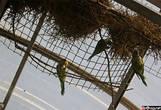 Попугаи, вид снизу