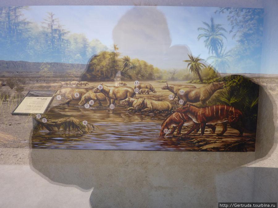 Картина древних животных в павильончике .Снимок через стекло, за спиной солнце...