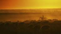 Закат в долине реки Шу. Чабан гонит свое стадо в кошару.