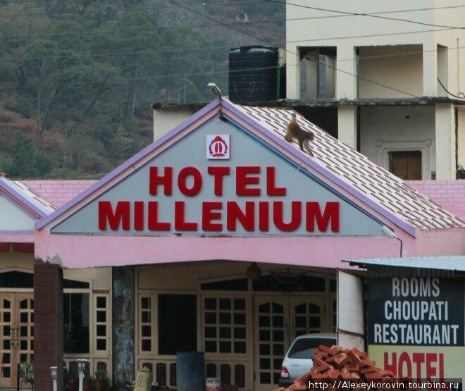 Мой отель с обезьяной