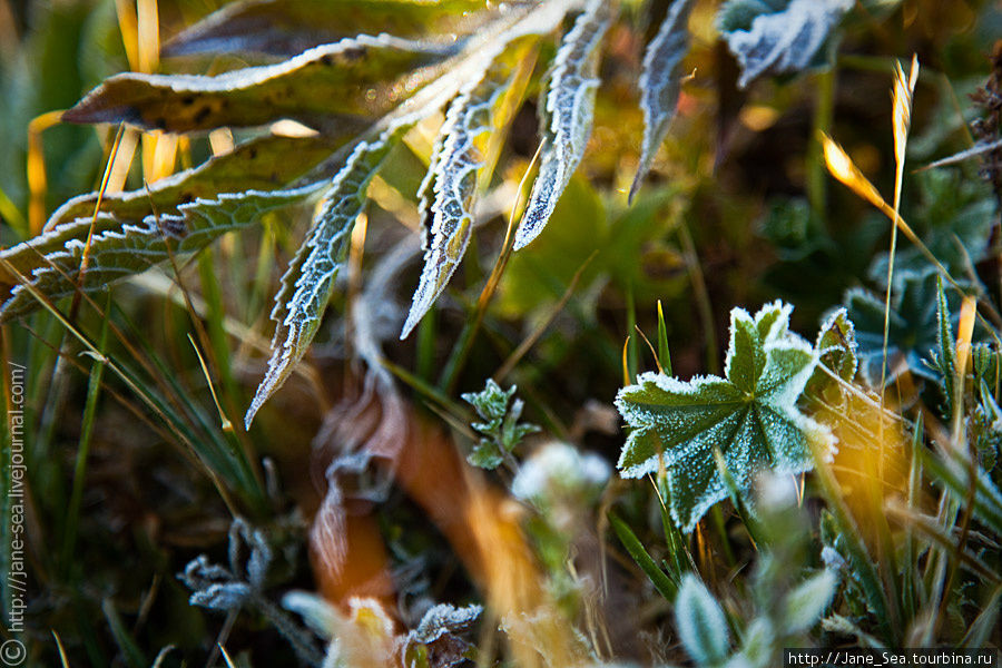 В тени трава еще не успела оттаять Тюнгур, Россия