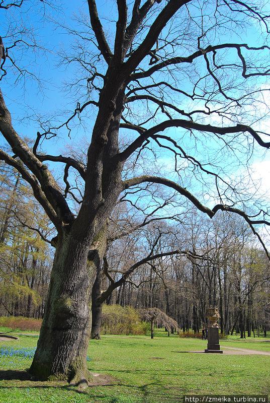 Знаменитый дуб и вазон (часто на картинках с этим парком они присутствуют)