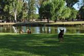 Пес на страже собственности хозяев, пока те купаются