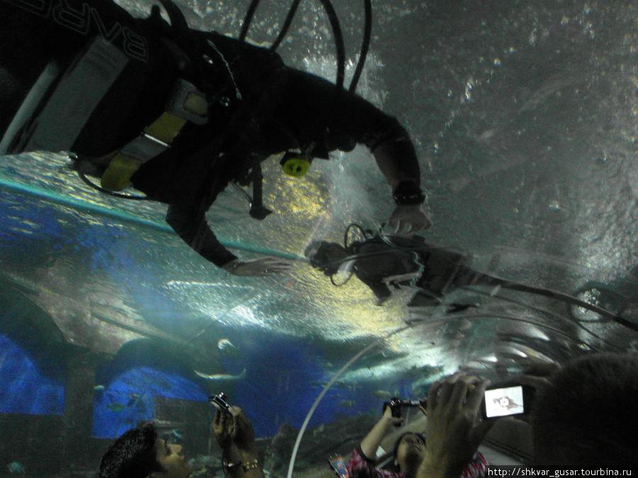 За $ можно поплавать в аквариему