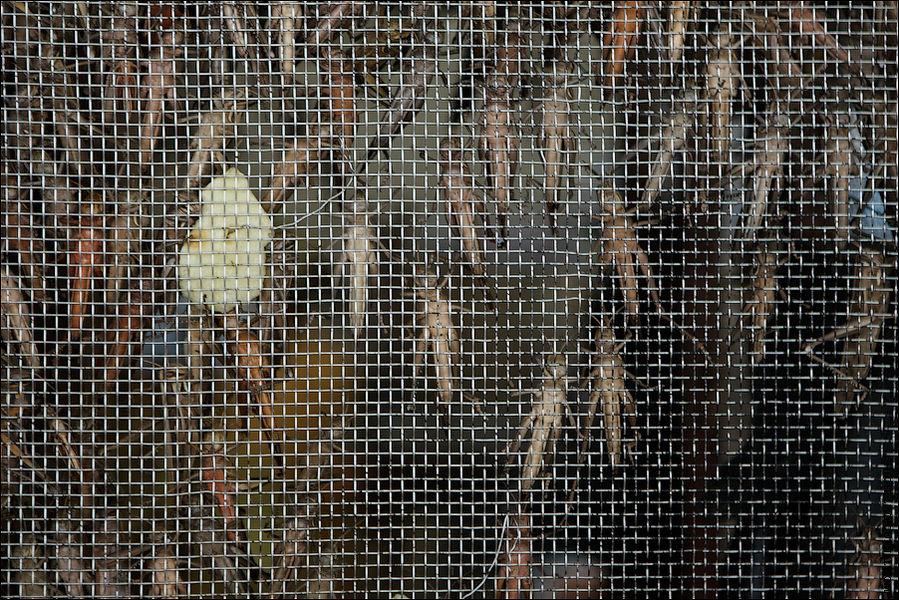 Тут же продают корм для птиц в виде живых кузнечиков, саранчи и сверчков