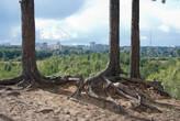 Есть в Сыктывкаре местечко Красная гора, никогда раньше там не была кроме пляжа. В этом году мы ехали мимо и остановились в живописном месте. Это действительно выглядит как гора, потому что за сосенками резкий обрыв, и оттуда видно город. Мне очень понравилось — можно сидеть на корнях деревьев и смотреть на панораму города.