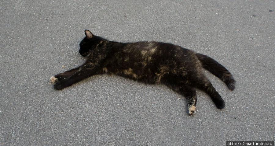 Эту кошку разбудить было очень трудно. Тут мы её сфотографировали при входе в монастырь. В конце есть фотография, когда мы уже собирались выходить и увидели, что кошка до сих пор спит. Конечно, мы не могли не разбудить её напоследок. :)