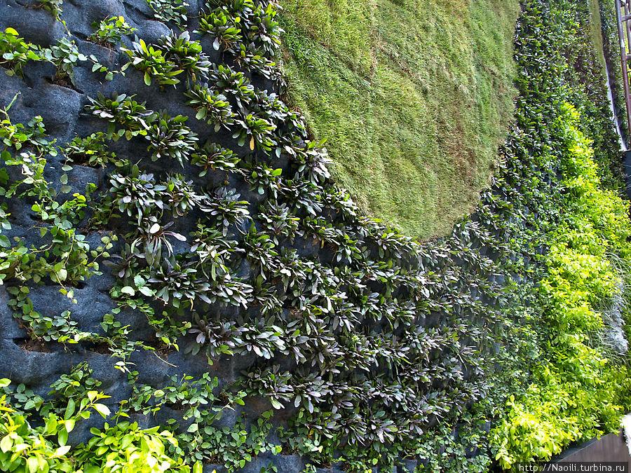 Зеленая стена состоит из множества горшочков