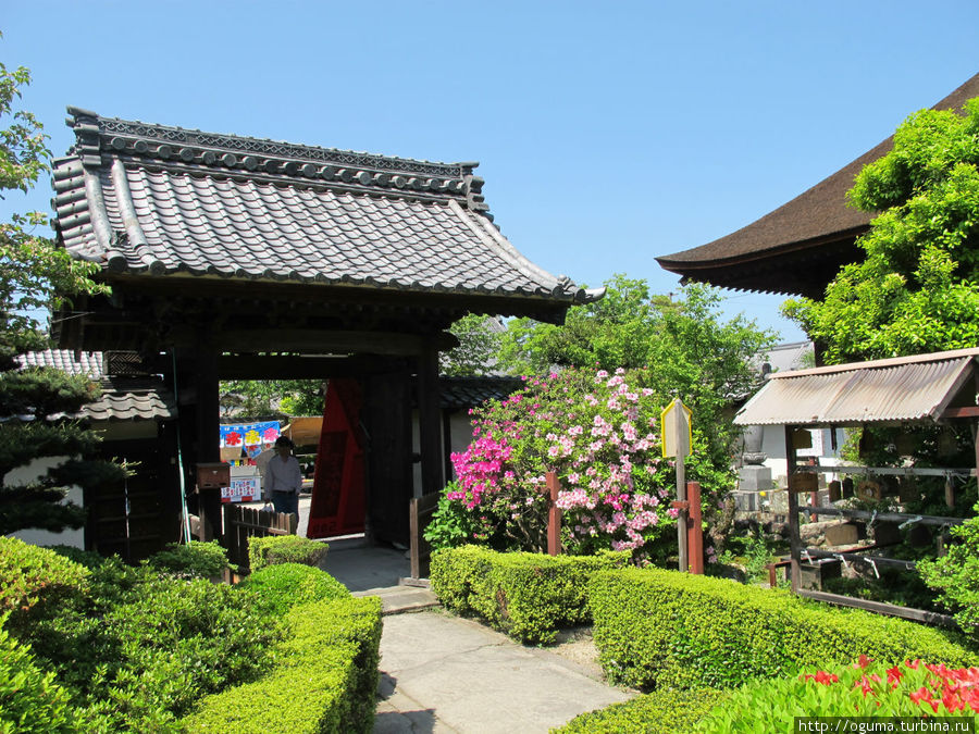 Глициниевый дождь в храме Мандара Конан, Япония