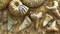 Окаменелости сохранили до наших дней  детали образов древних обитателей океана – раковины аммонитов и зубы акул