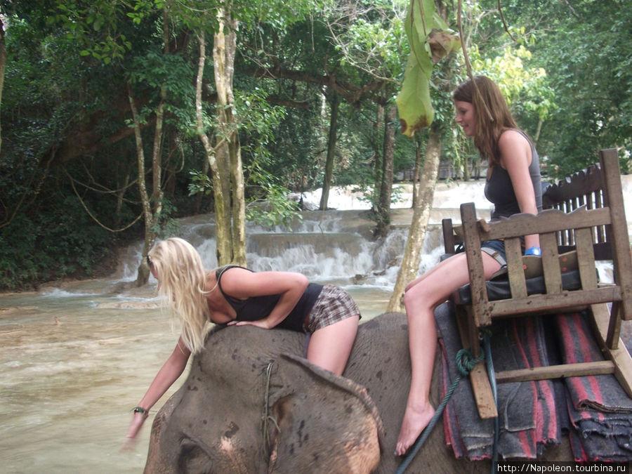 датчанки в восторге, но слониха мне понравилась больше