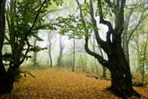 Ворота в лес
