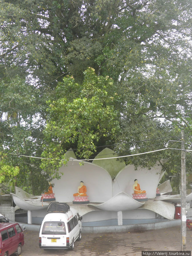 Традиционное для буддийских храмов дерево для медитации ...