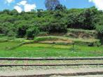 Все фото размещены в хронологической последовательности. Рисовые поля — неотъемливая часть. Подобное будет потом и в столице Антананариву