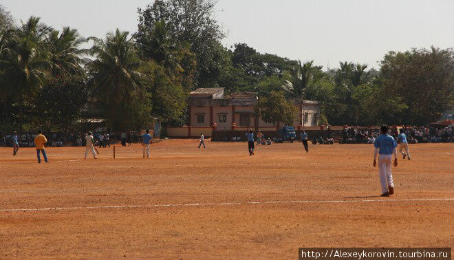 Опять крикет