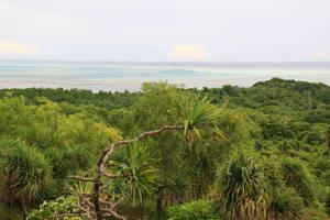 Острова показались мне одним из самых зелёных мест на свете