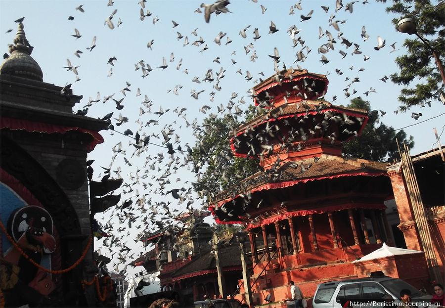 На дворцовой площади Катманду полно голубей.