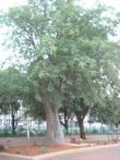 Двойное дерево и при нем малые такие же