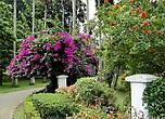Площадь сада составляет около 60 га, в саду высажено почти 4800 видов растений со всего мира, из них 28% эндемики