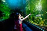 Гвоздь программы — стеклянный тоннель с медленно двигающимся траволатором, проходящий по дну огромного аквариума. Вокруг плавают акулы, скаты и прочие крупные обитатели морских глубин.