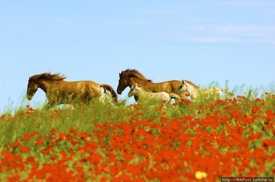 Казахская лошадь Казахстан