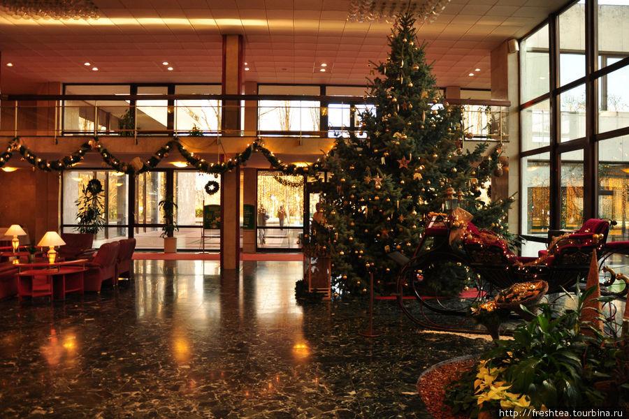 Холл отеля в предверии Рождества и Новогодних праздников: елка настоящая, сани рядом с ней — тоже.