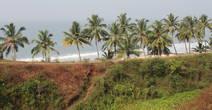 Кокосовые пальмы вдоль берега
