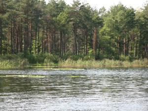 островки водяных лилий