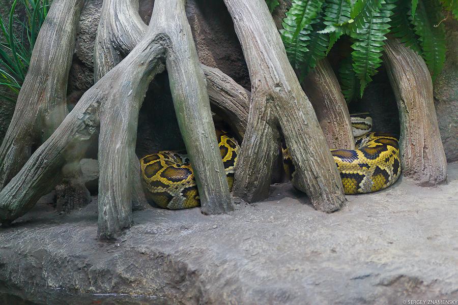 Есть даже огромные змеи: