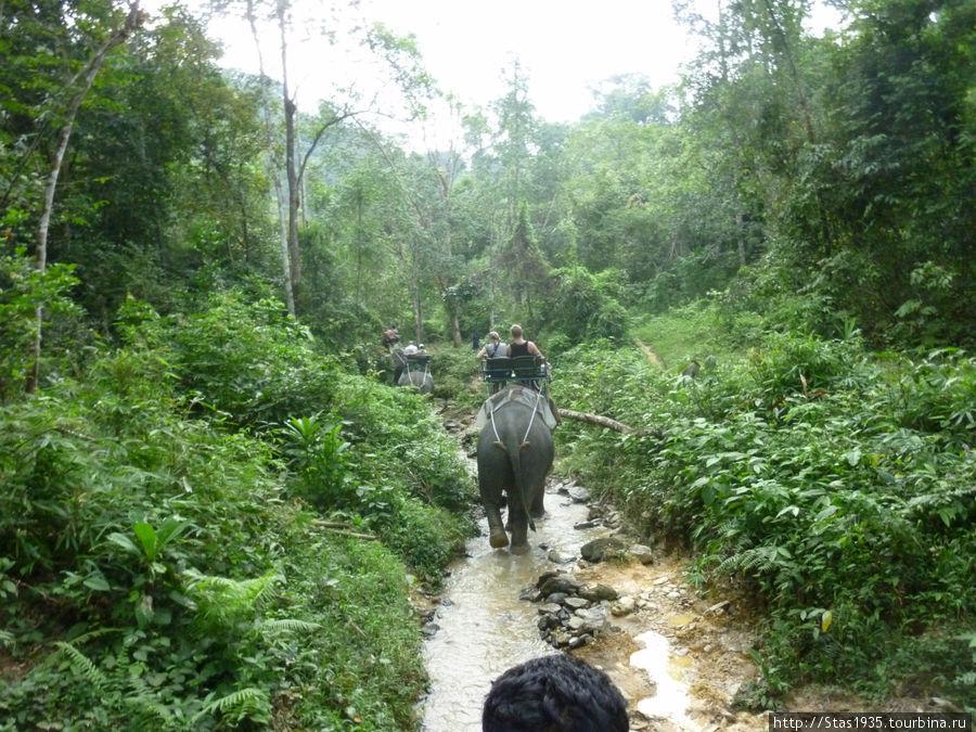 Южный Таиланд. Национальный парк Као Сок. На слонах по джунглям.