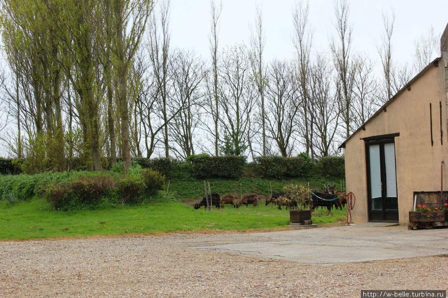 Ферма и загон с козочками.