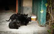 На задворках заповедника живет семья. Котята играют, а мама наблюдает за ними сверху. Фотографироваться она отказалась наотрез.