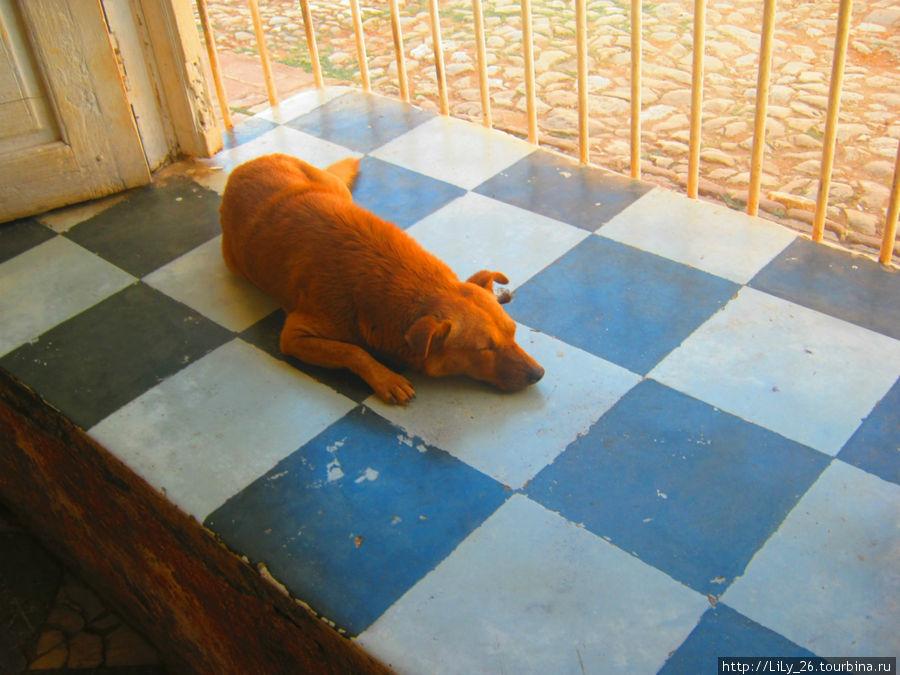 Собаки Тринидада